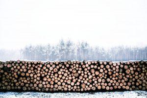 Scott & Stewart Forestry - lumber