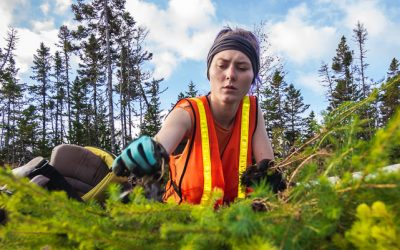 Hiring Tree Planters!