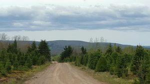 Scott & Stewart - Tree Roads at Floyds